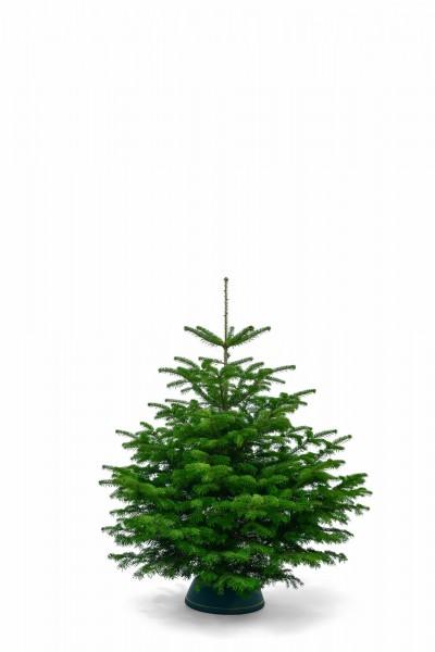 Nordmanntanne Weihnachtsbaum.Nordmanntanne 1 00 1 25m 1a Premium Sortierung