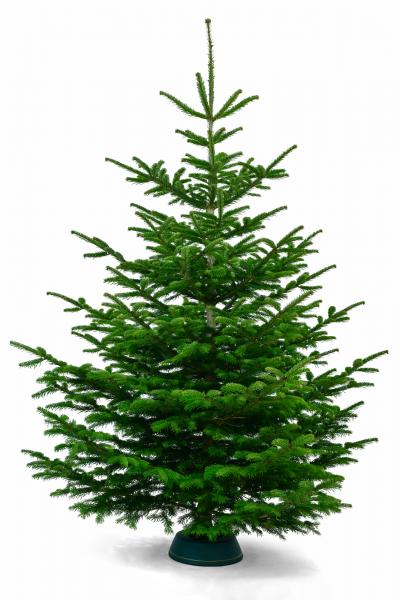 Bester Weihnachtsbaum